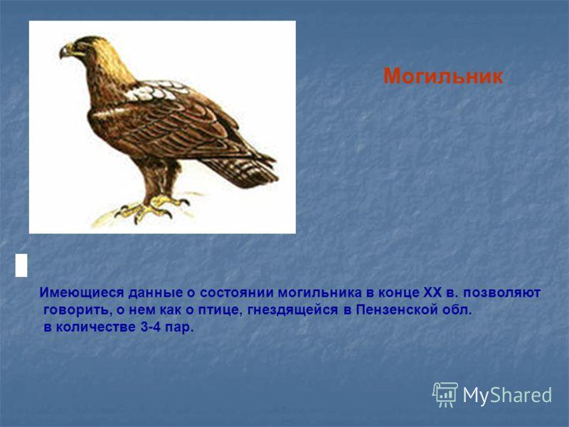 Могильник Имеющиеся данные о состоянии могильника в конце XX в. позволяют говорить, о нем как о птице, гнездящейся в Пензенской обл. в количестве 3-4 пар.