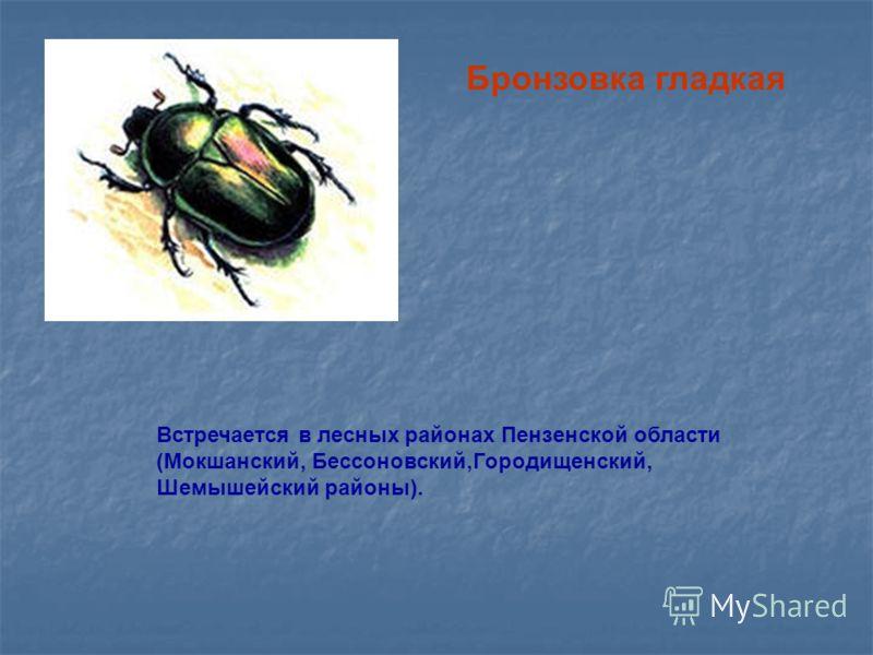 Бронзовка гладкая Встречается в лесных районах Пензенской области (Мокшанский, Бессоновский,Городищенский, Шемышейский районы).