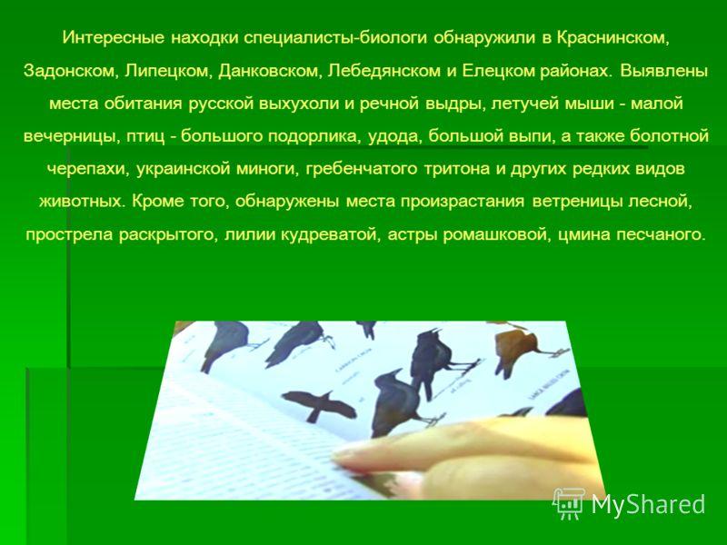 Интересные находки специалисты-биологи обнаружили в Краснинском, Задонском, Липецком, Данковском, Лебедянском и Елецком районах. Выявлены места обитания русской выхухоли и речной выдры, летучей мыши - малой вечерницы, птиц - большого подорлика, удода