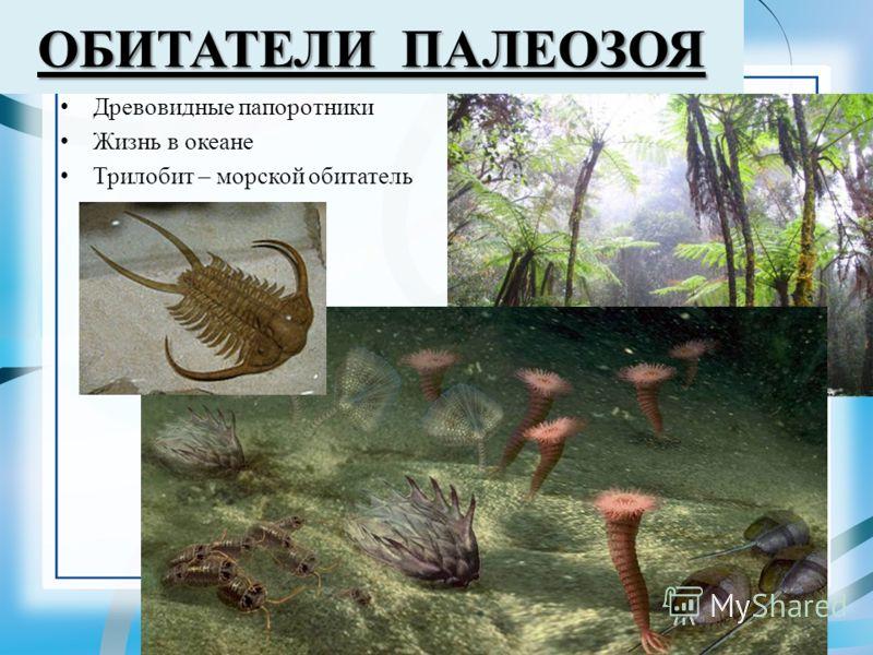 ОБИТАТЕЛИ ПАЛЕОЗОЯ Древовидные папоротники Жизнь в океане Трилобит – морской обитатель