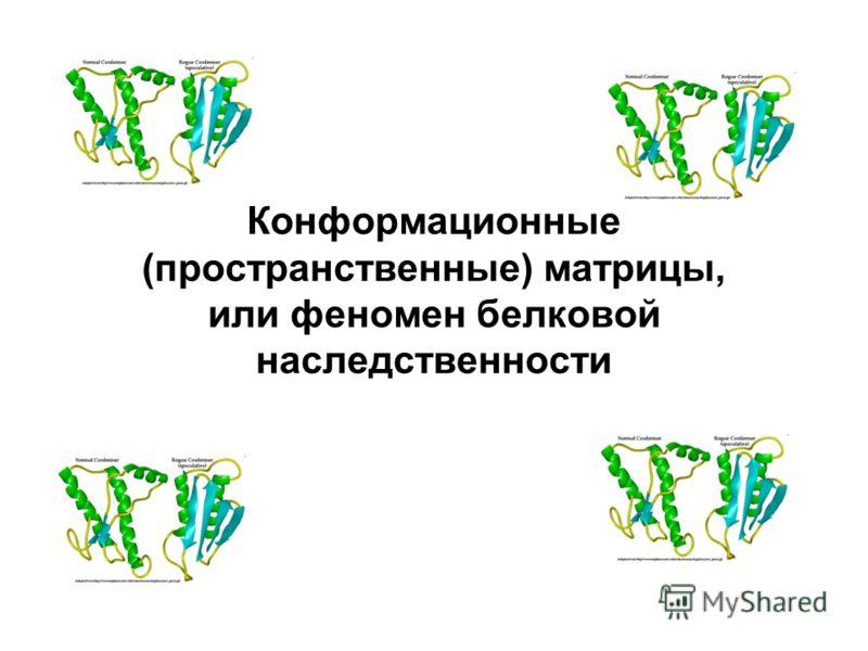 Конформационные (пространственные) матрицы, или феномен белковой наследственности