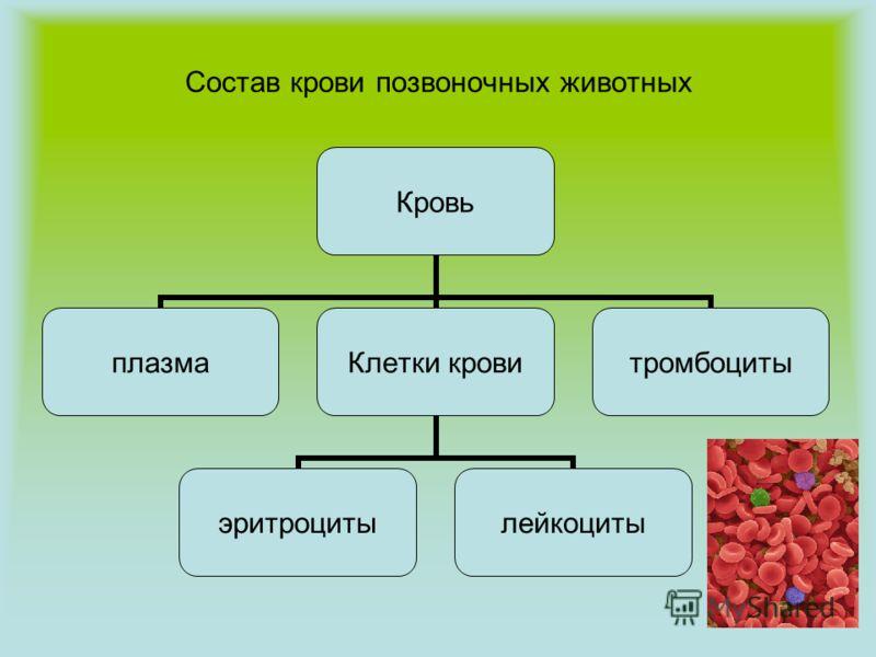 Состав крови позвоночных животных Кровь плазма Клетки крови эритроцитылейкоциты тромбоциты