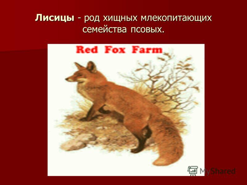 Лисицы - род хищных млекопитающих семейства псовых.