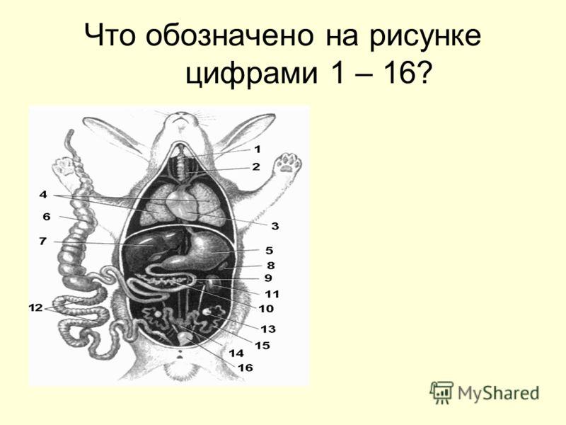 Что обозначено на рисунке цифрами 1 – 16?