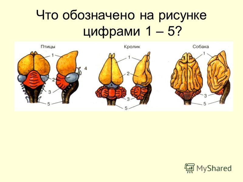 Что обозначено на рисунке цифрами 1 – 5?