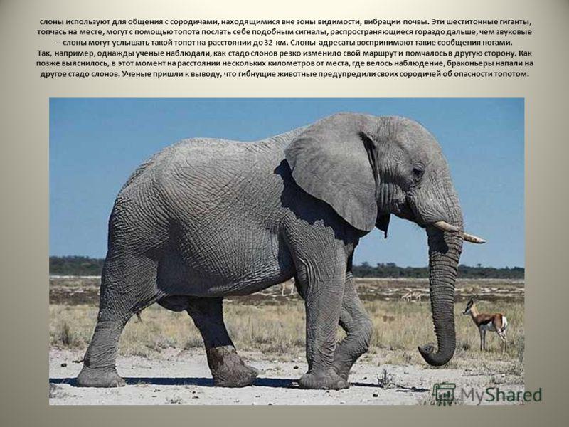 слоны используют для общения с сородичами, находящимися вне зоны видимости, вибрации почвы. Эти шеститонные гиганты, топчась на месте, могут с помощью топота послать себе подобным сигналы, распространяющиеся гораздо дальше, чем звуковые – слоны могут