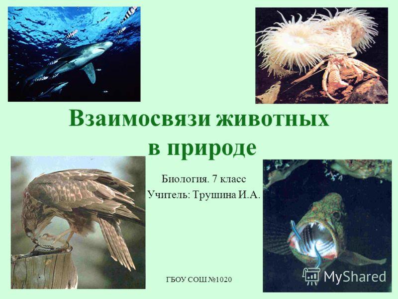 ГБОУ СОШ 1020 Взаимосвязи животных в природе Биология. 7 класс Учитель: Трушина И.А.