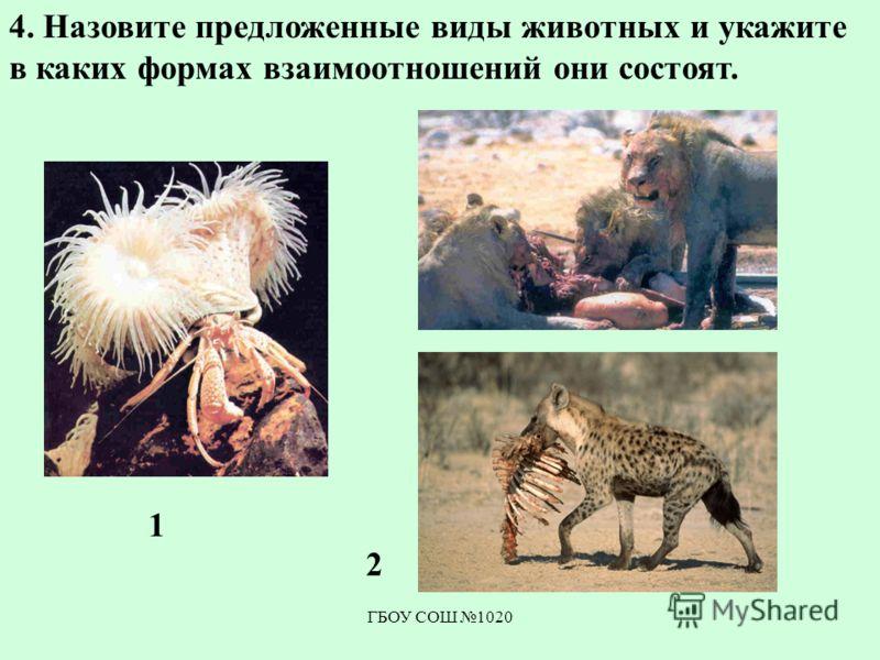 ГБОУ СОШ 1020 4. Назовите предложенные виды животных и укажите в каких формах взаимоотношений они состоят. 1 2