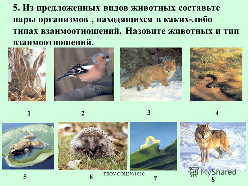 ГБОУ СОШ 1020 5. Из предложенных видов животных составьте пары организмов, находящихся в каких-либо типах взаимоотношений. Назовите животных и тип взаимоотношений. 12 3 4 56 7 8