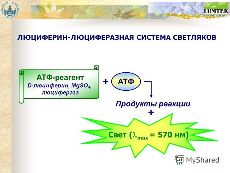 ЛЮЦИФЕРИН-ЛЮЦИФЕРАЗНАЯ СИСТЕМА СВЕТЛЯКОВ АТФ-реагент D-люциферин, MgSO 4, люцифераза Свет ( max = 570 нм) ATФ + Продукты реакции +