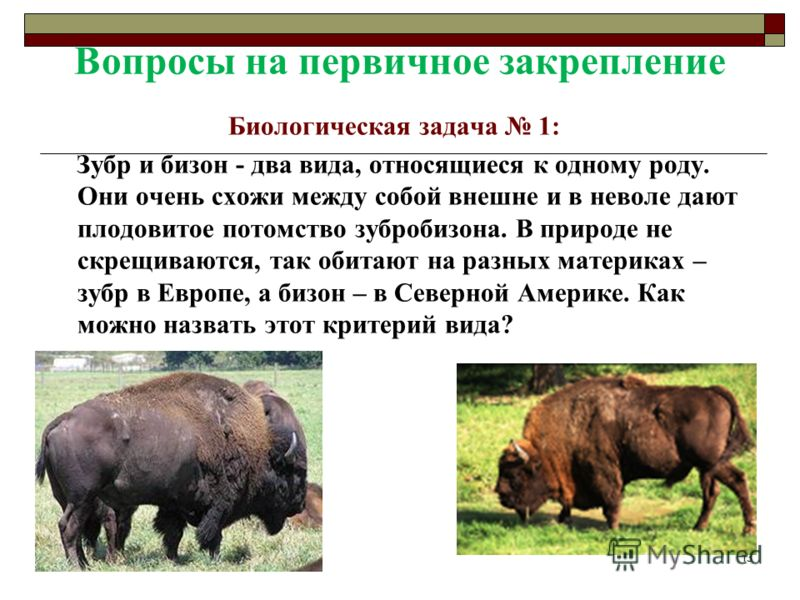 Вопросы на первичное закрепление Биологическая задача 1: Зубр и бизон - два вида, относящиеся к одному роду. Они очень схожи между собой внешне и в неволе дают плодовитое потомство зубробизона. В природе не скрещиваются, так обитают на разных материк