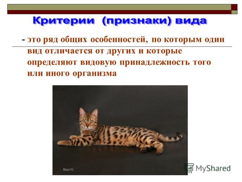 - это ряд общих особенностей, по которым один вид отличается от других и которые определяют видовую принадлежность того или иного организма