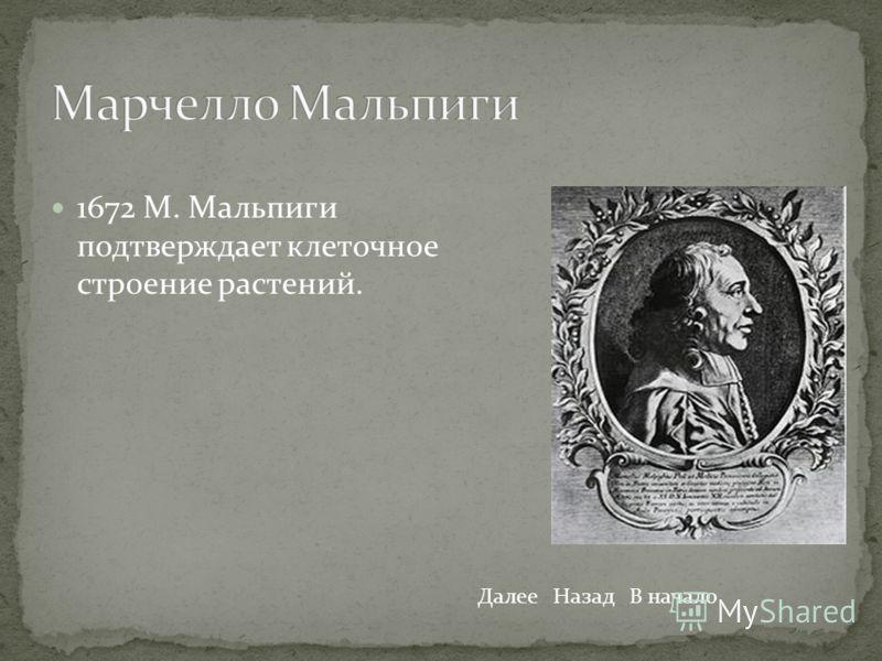 1672 М. Мальпиги подтверждает клеточное строение растений. ДалееНазадВ начало