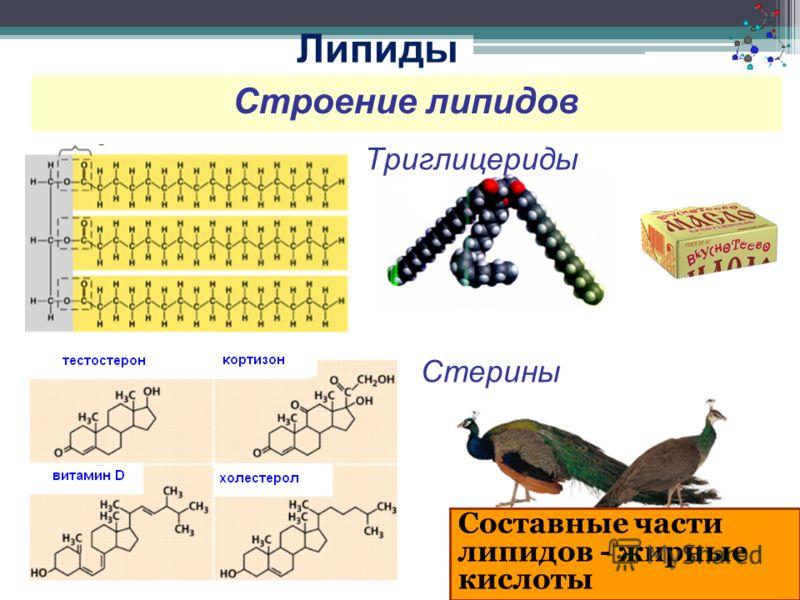 Строение липидов Триглицериды Стерины Липиды Составные части липидов - жирные кислоты