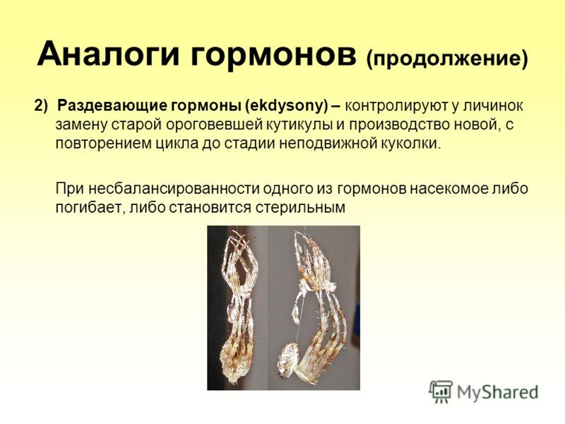 Аналоги гормонов (продолжение) 2) Раздевающие гормоны (ekdysony) – контролируют у личинок замену старой ороговевшей кутикулы и производство новой, с повторением цикла до стадии неподвижной куколки. При несбалансированности одного из гормонов насекомо