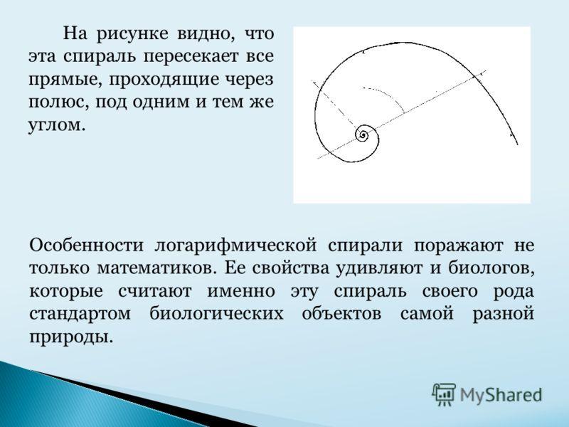 Особенности логарифмической спирали поражают не только математиков. Ее свойства удивляют и биологов, которые считают именно эту спираль своего рода стандартом биологических объектов самой разной природы. На рисунке видно, что эта спираль пересекает в
