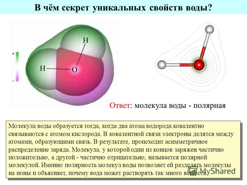 В чём секрет уникальных свойств воды? Ответ: молекула воды - полярная Молекула воды образуется тогда, когда два атома водорода ковалентно связываются с атомом кислорода. В ковалентной связи электроны делятся между атомами, образующими связь. В резуль