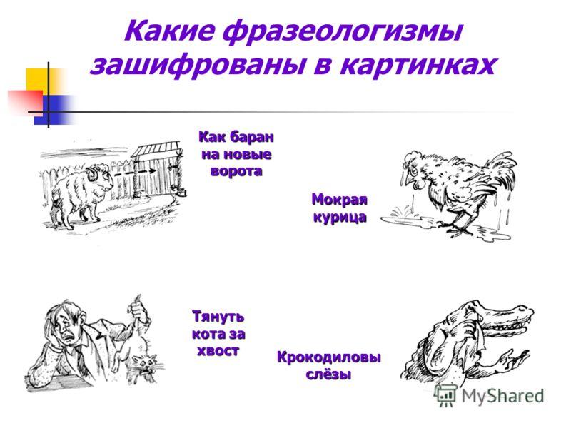 Какие фразеологизмы зашифрованы в картинках Мокрая курица Тянуть кота за хвост Крокодиловы слёзы Как баран на новые ворота