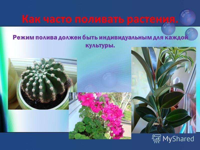 Как часто поливать растения. Режим полива должен быть индивидуальным для каждой культуры.
