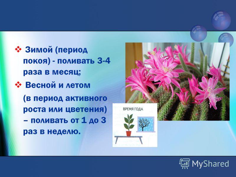 Зимой (период покоя) - поливать 3-4 раза в месяц; Весной и летом (в период активного роста или цветения) – поливать от 1 до 3 раз в неделю.