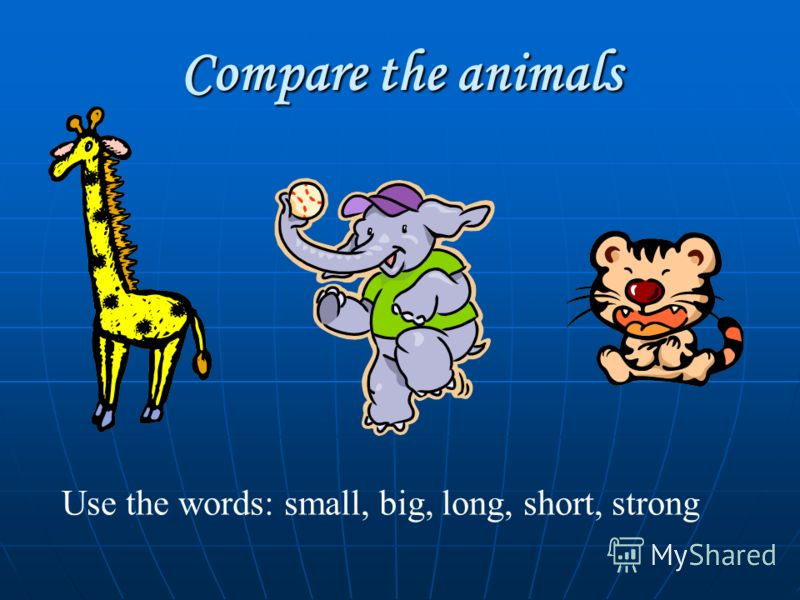 Compare the animals Use the words: small, big, long, short, strong