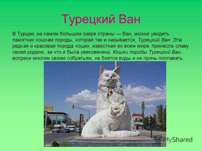 Турецкий Ван В Турции, на самом большом озере страны Ван, можно увидеть памятник кошкам породы, которая так и называется, Турецкий Ван. Эта редкая и красивая порода кошек, известная во всем мире, принесла славу своей родине, за что и была увековечена