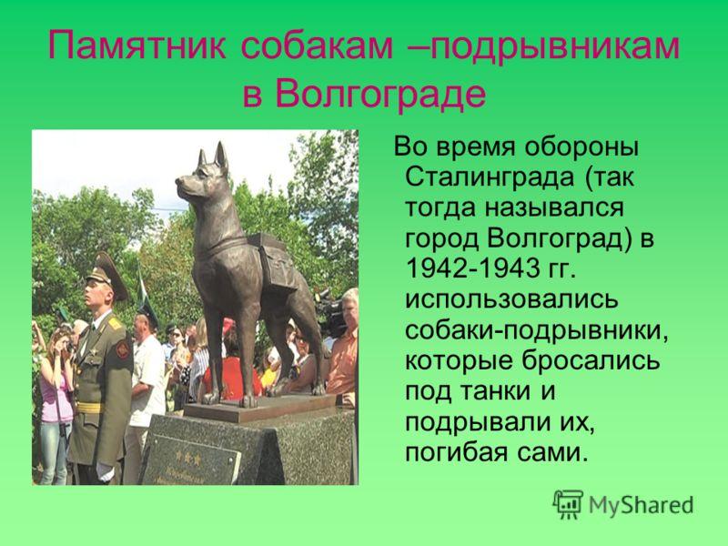 Памятник собакам –подрывникам в Волгограде Во время обороны Сталинграда (так тогда назывался город Волгоград) в 1942-1943 гг. использовались собаки-подрывники, которые бросались под танки и подрывали их, погибая сами.