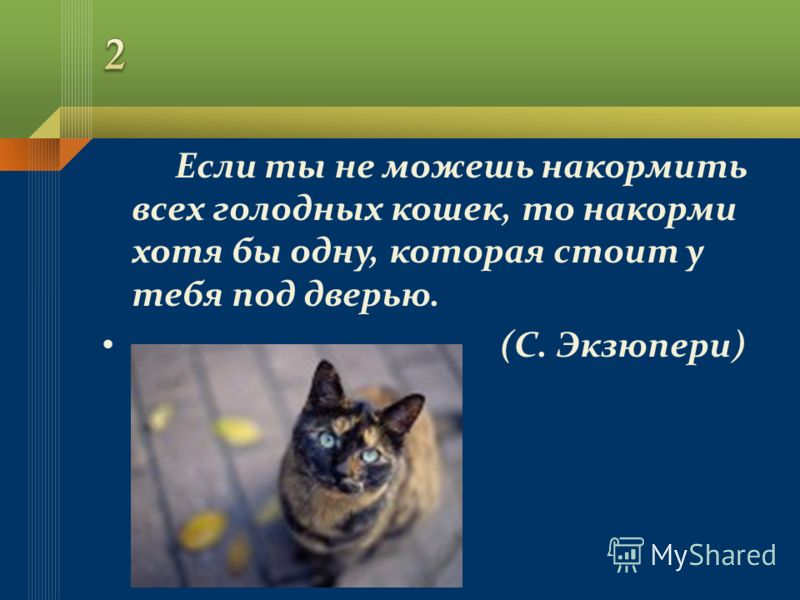 Если ты не можешь накормить всех голодных кошек, то накорми хотя бы одну, которая стоит у тебя под дверью. (С. Экзюпери)