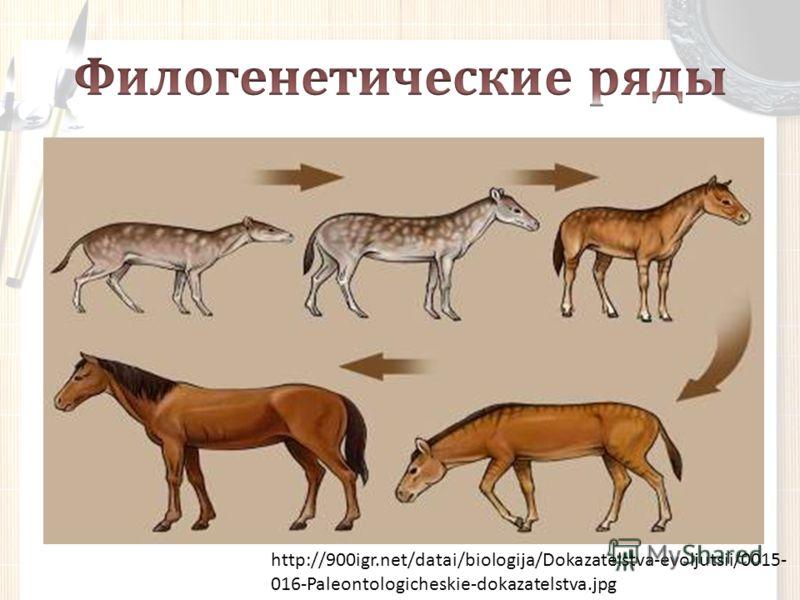http://900igr.net/datai/biologija/Dokazatelstva-evoljutsii/0015- 016-Paleontologicheskie-dokazatelstva.jpg