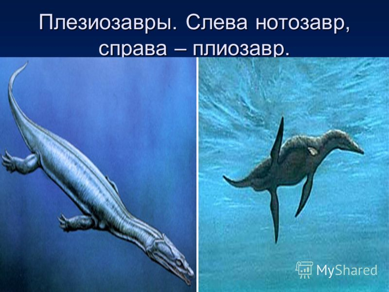 Плезиозавры. Слева нотозавр, справа – плиозавр.
