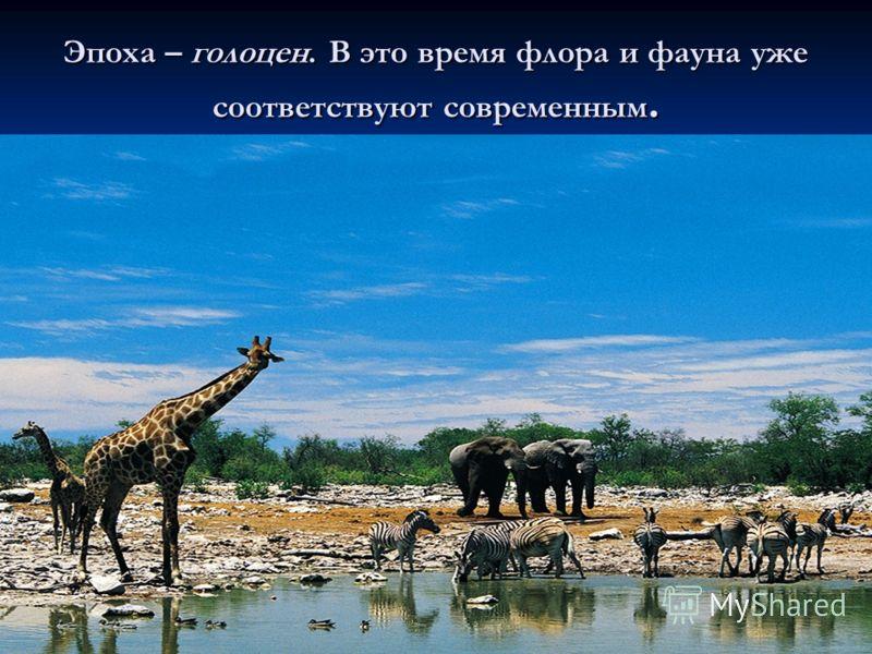 Эпоха – голоцен. В это время флора и фауна уже соответствуют современным.