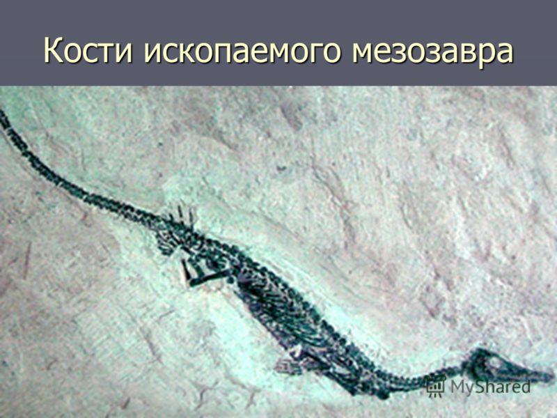 Кости ископаемого мезозавра