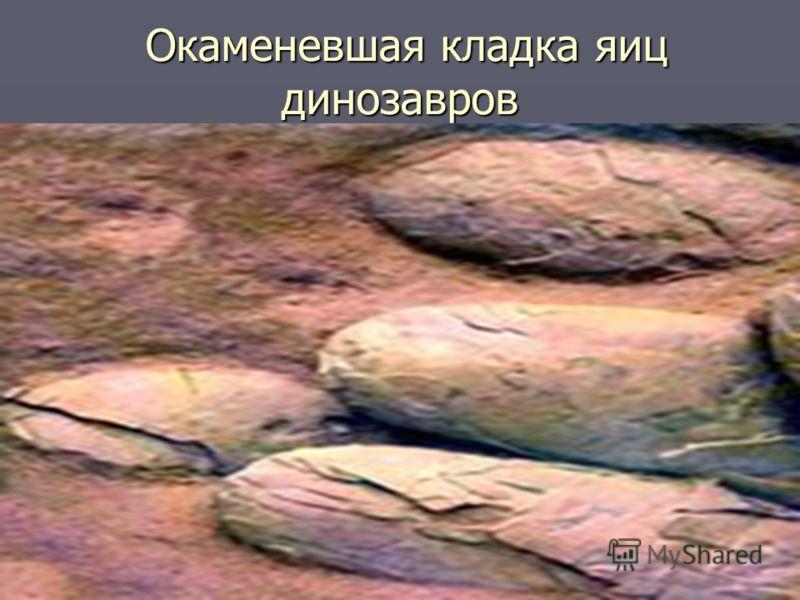 Окаменевшая кладка яиц динозавров Окаменевшая кладка яиц динозавров