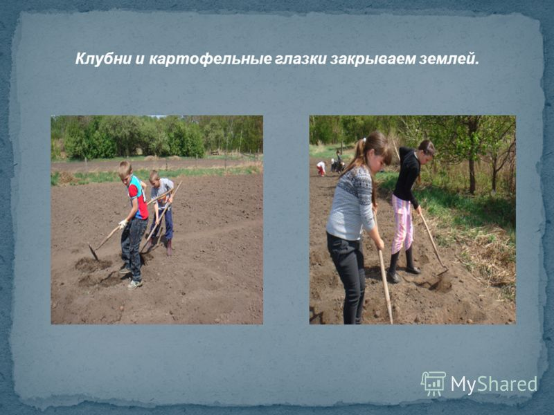 Клубни и картофельные глазки закрываем землей. Работу выполнили хорошо! Будем ждать всходов. Обработаем и соберем урожай. Теперь можно и домой.