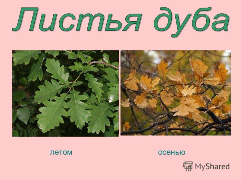 осенью летом