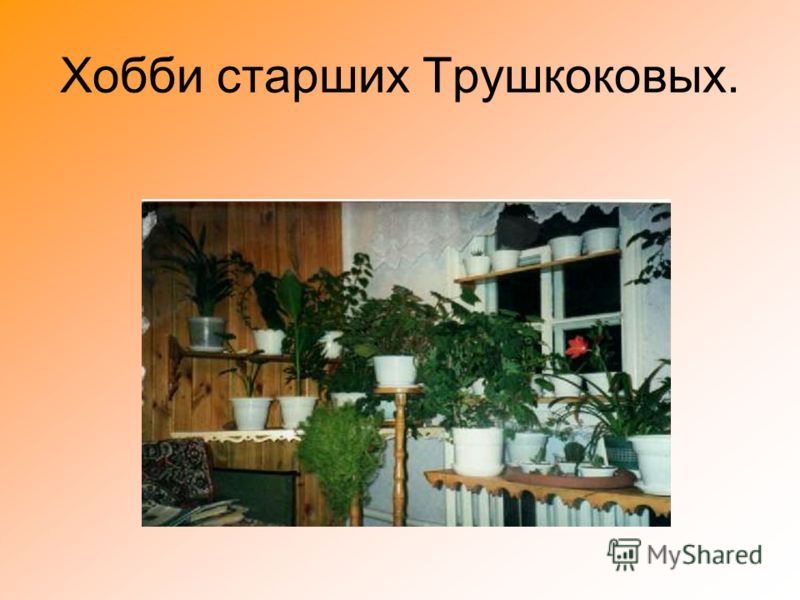 Хобби старших Трушкоковых.