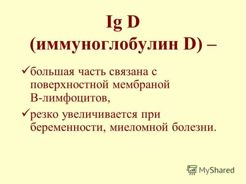 Ig D (иммуноглобулин D) – большая часть связана с поверхностной мембраной В-лимфоцитов, резко увеличивается при беременности, миеломной болезни.