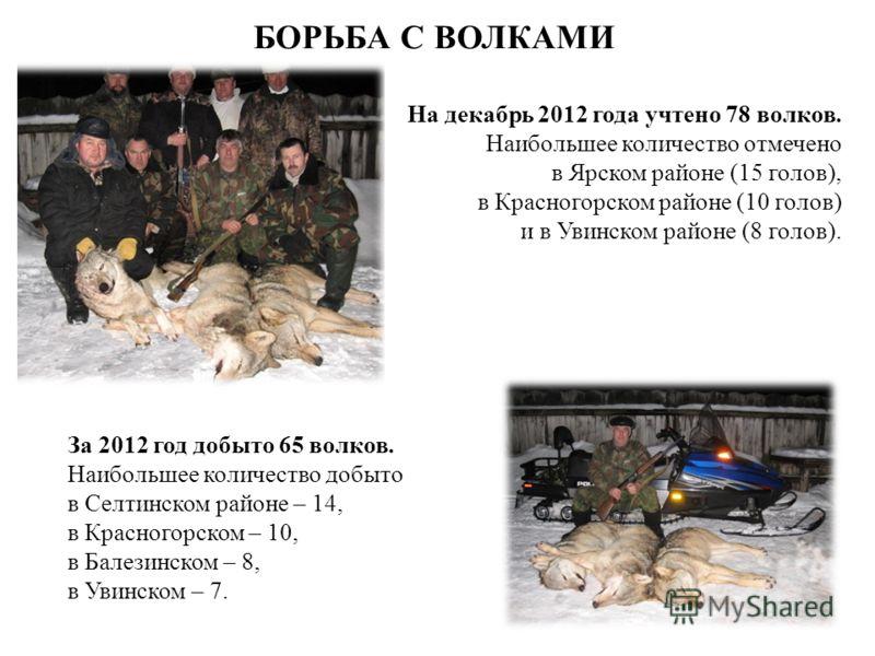 БОРЬБА С ВОЛКАМИ На декабрь 2012 года учтено 78 волков. Наибольшее количество отмечено в Ярском районе (15 голов), в Красногорском районе (10 голов) и в Увинском районе (8 голов). За 2012 год добыто 65 волков. Наибольшее количество добыто в Селтинско
