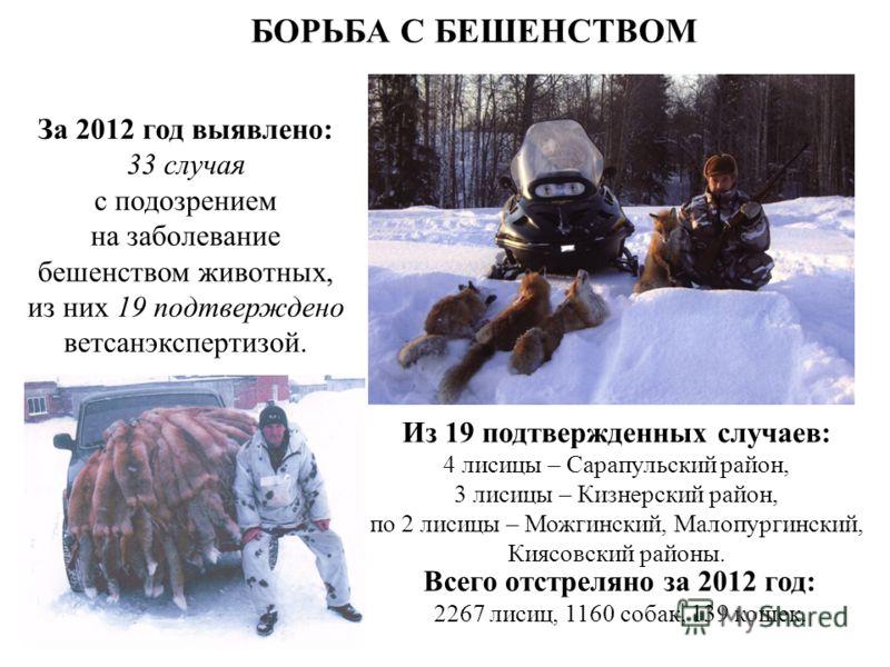 БОРЬБА С БЕШЕНСТВОМ За 2012 год выявлено: 33 случая с подозрением на заболевание бешенством животных, из них 19 подтверждено ветсанэкспертизой. Из 19 подтвержденных случаев: 4 лисицы – Сарапульский район, 3 лисицы – Кизнерский район, по 2 лисицы – Мо