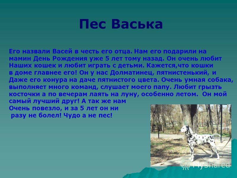 Пес Васька Его назвали Васей в честь его отца. Нам его подарили на мамин День Рождения уже 5 лет тому назад. Он очень любит Наших кошек и любит играть с детьми. Кажется,что кошки в доме главнее его! Он у нас Долматинец, пятнистенький, и Даже его кону