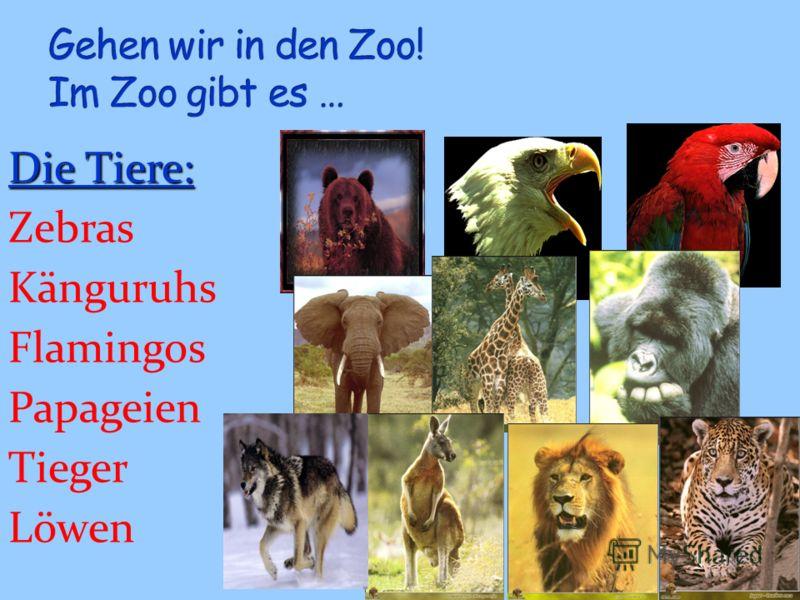 Die Tiere: Zebras Känguruhs Flamingos Papageien Tieger Löwen