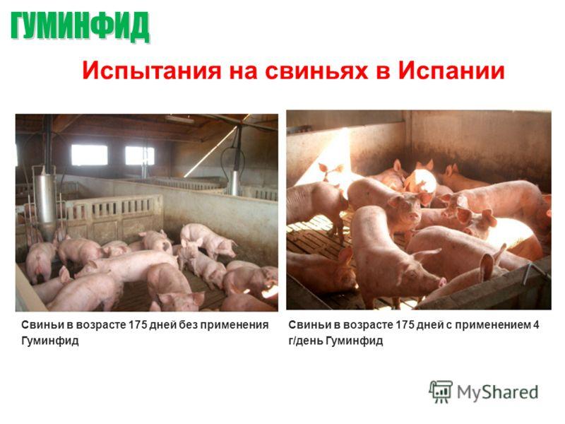 Испытания на свиньях в Испании Свиньи в возрасте 175 дней без применения Гуминфид Свиньи в возрасте 175 дней с применением 4 г/день Гуминфид