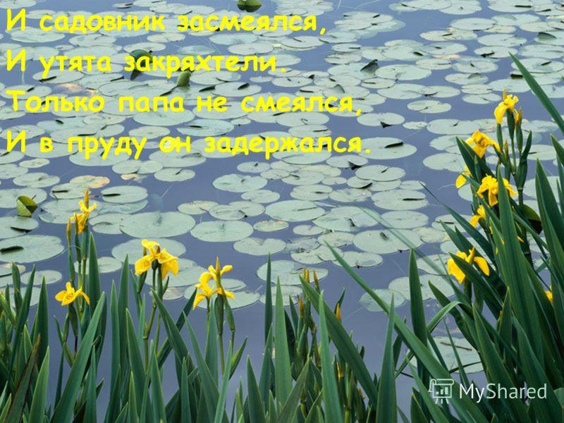 И садовник засмеялся, И утята закряхтели. Только папа не смеялся, И в пруду он задержался.