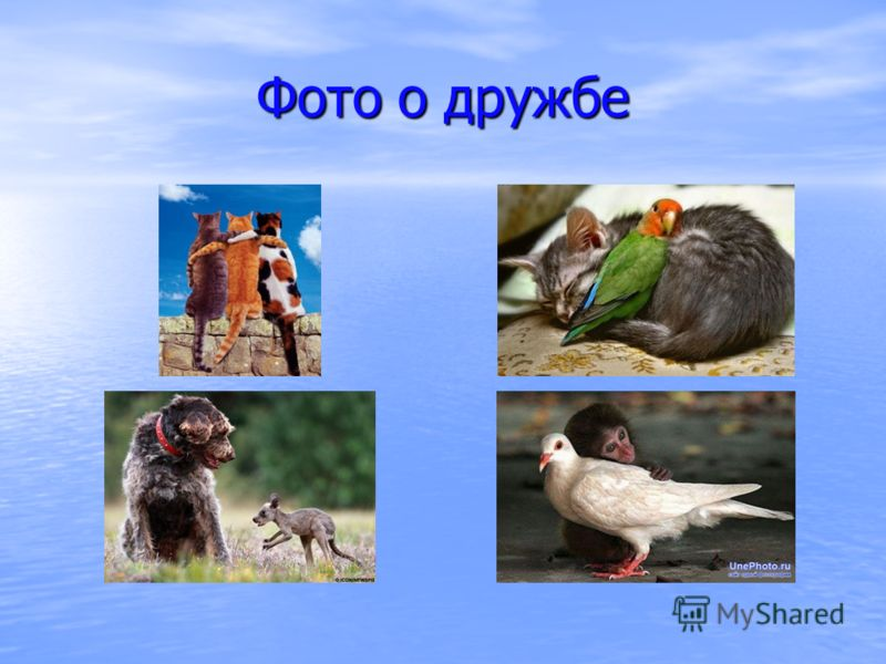 Фото о дружбе