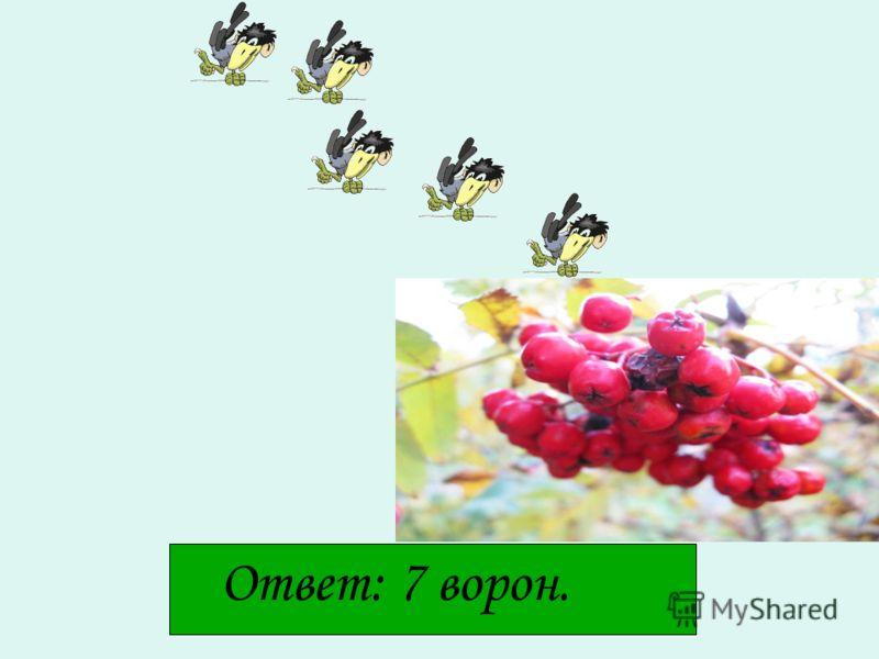 Задача Пять ворон на ветку сели, Две ещё к ним прилетели, Отвечайте быстро, смело: Сколько всех их прилетело?