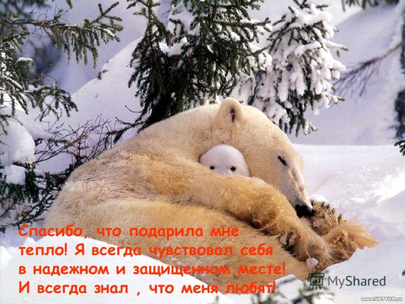 Спасибо, что подарила мне тепло! Я всегда чувствовал себя в надежном и защищенном месте! И всегда знал, что меня любят!