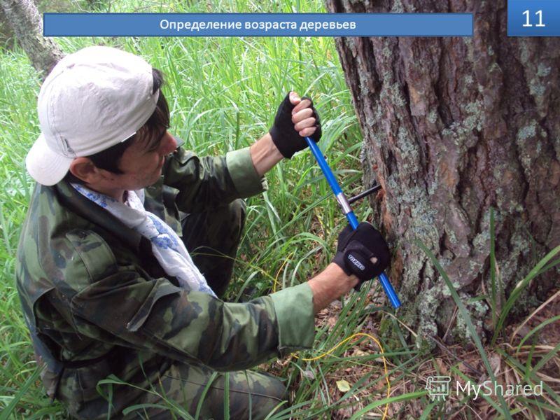 11 Определение возраста деревьев