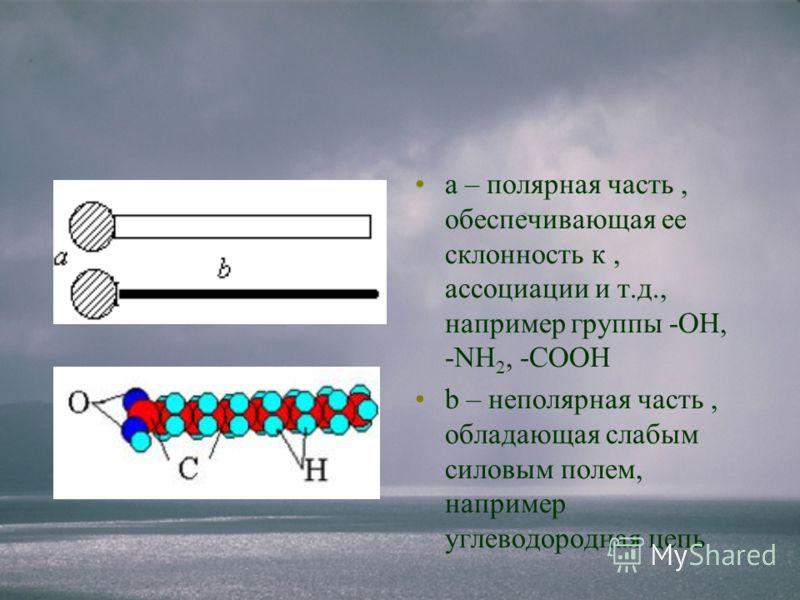 а – полярная часть, обеспечивающая ее склонность к, ассоциации и т.д., например группы -ОН, -NH 2, -СООН b – неполярная часть, обладающая слабым силовым полем, например углеводородная цепь