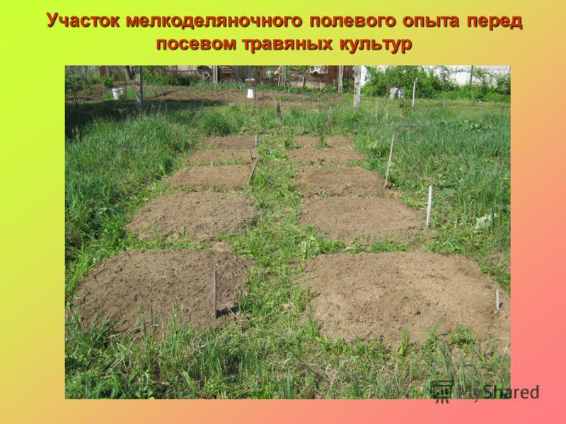 Участок мелкоделяночного полевого опыта перед посевом травяных культур