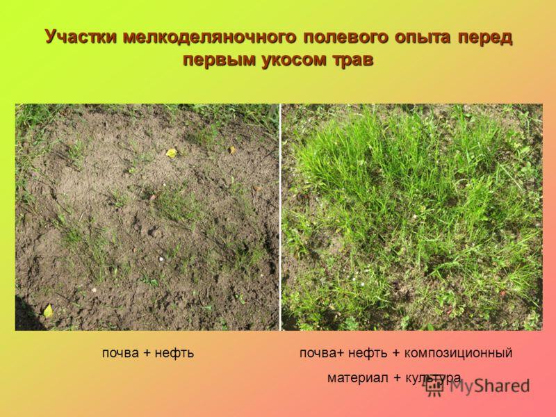 Участки мелкоделяночного полевого опыта перед первым укосом трав почва + нефть почва+ нефть + композиционный материал + культура